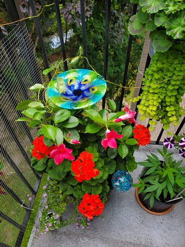 Flowers Brighton, ON