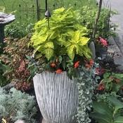 Flower pot is overflowing
