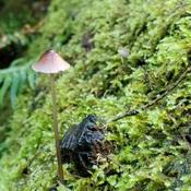 L'il Mushroom