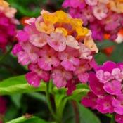 Strange colourful flower