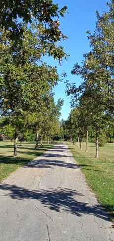 A promenade of burr oaks Pointe-Claire, QC