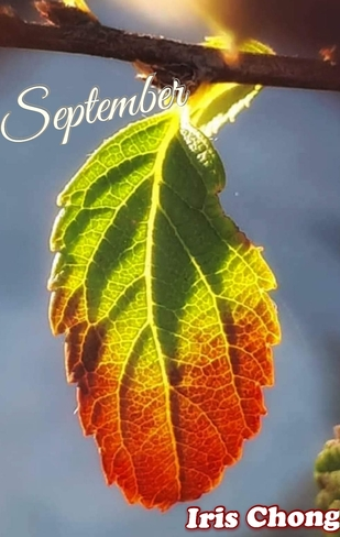 Sept 19 2021 21C Beautiful Sunday!:) Season is changing! Thornhill Thornhill, ON