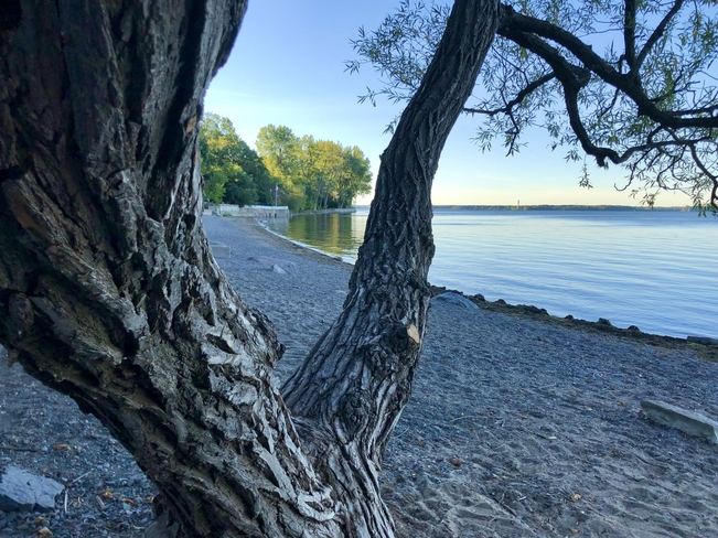 Quiet morning by the lake!! Dorval, Quebec, CA