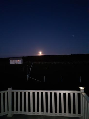 Evening view, Mainland, NL