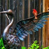 Bird on Wing