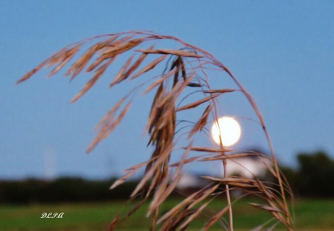 Pleine Lune des Moissons. St-André de Kamouraska