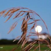 Pleine Lune des Moissons.