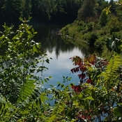 Rivière du Nord entre les branches