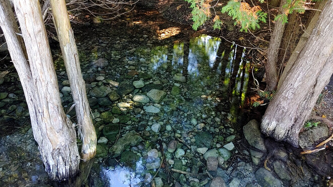 Pool of water on the Grand River bike trail. Glen Morris, ON
