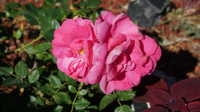 4- different blossoms. Regina, SK