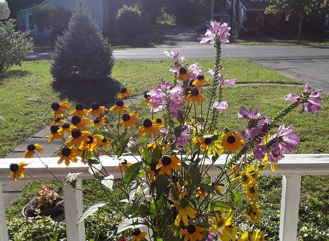 happy flowers Ridgeway, ON