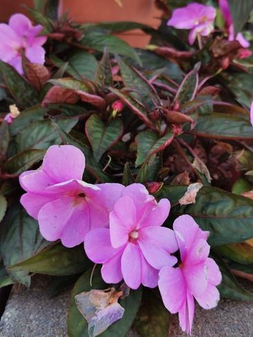 fleurs d'automne. Joliette, QC