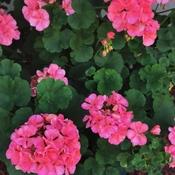 encore de belles fleurs.