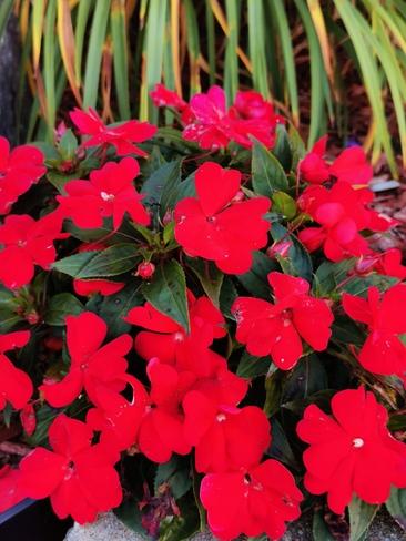 automne en fleurs Joliette, QC