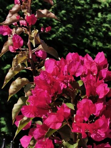 amour pour les fleurs Joliette, QC