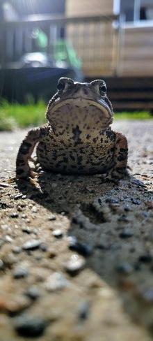 Mr. Toad Horseshoe Bay, ON