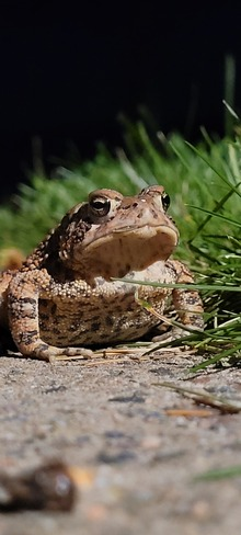 Mr Toad 2 Horseshoe Bay, ON