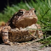 Mr Toad 2
