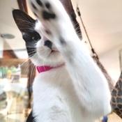 Ce chat veut des câlins.