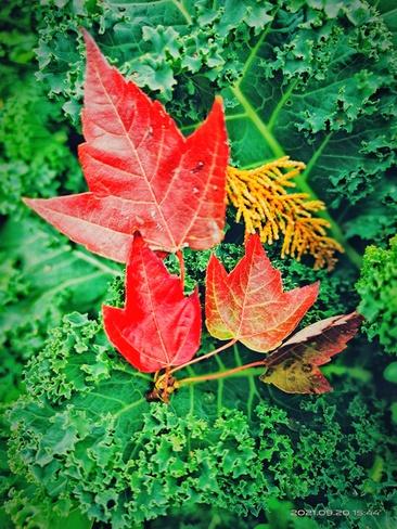 Fall Surrey, BC