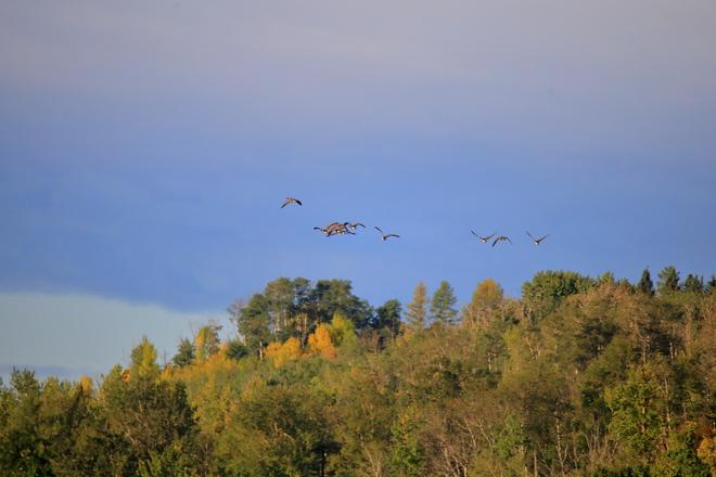 Fall colors Edmonton, AB