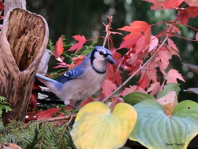 Ben oui... demain c'est l'automne!,, le 22 cette année.... Saint-Jean-sur-Richelieu, QC