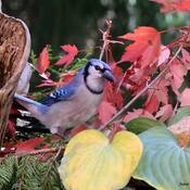 Ben oui... demain c'est l'automne!,, le 22 cette année....