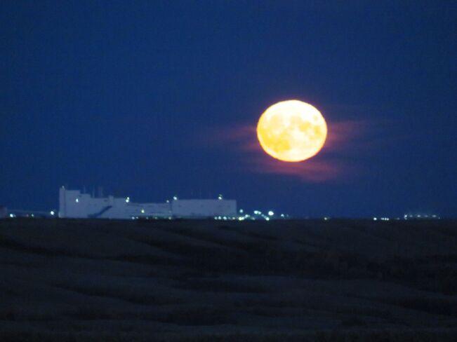 Corn Moon Rising Buffalo Pound Lake, Saskatchewan