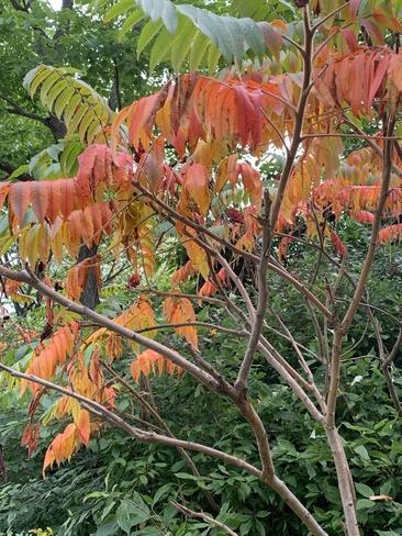 Fall is sure coming… Etobicoke, Ontario, CA