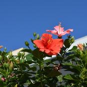 Last bloom of the season