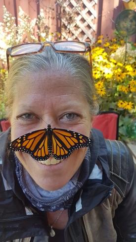Brandy's Monarch! Midland, ON