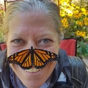 Brandy's Monarch!