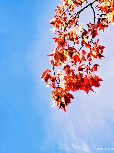 Autumn Surrey, BC