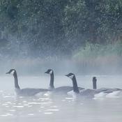 Trout Lake Morning