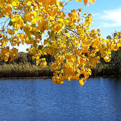 nice fall day by steven