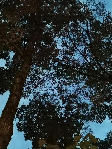 je retrouve la beauté de la nature Joliette, QC