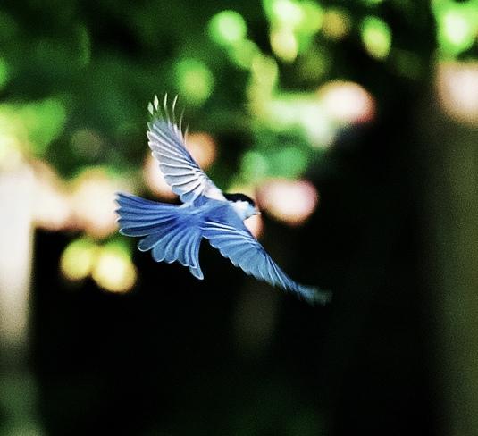 Chickadee Wings Orléans, ON K1C