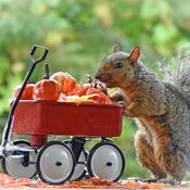 Happy Fall from grey squirrel.