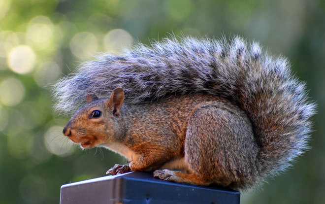 Squirrel wears a Fall sweater. Cobourg, ON