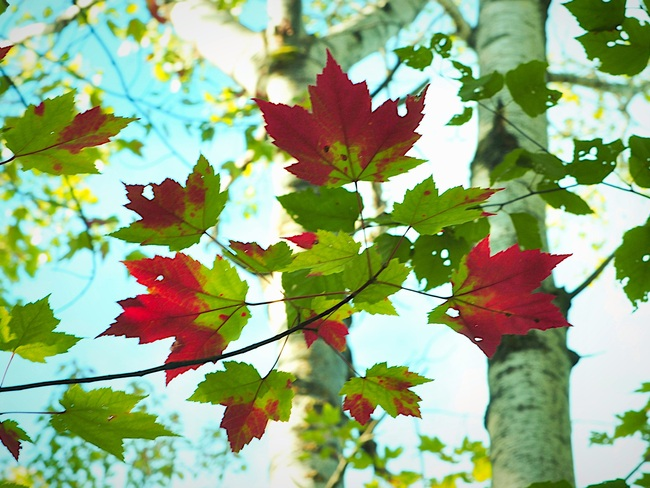 Le rouge de l'automne Gatineau, QC