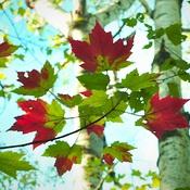 Le rouge de l'automne