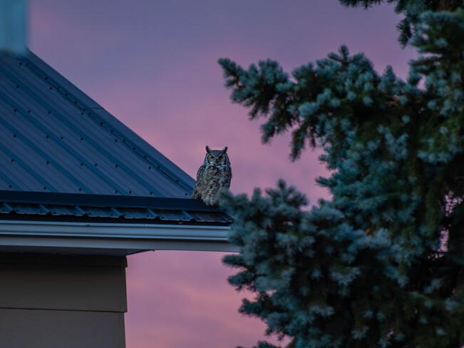 Morning Scout Spot Oyen, AB