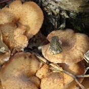 Tree Frog Likes Mushrooms Too