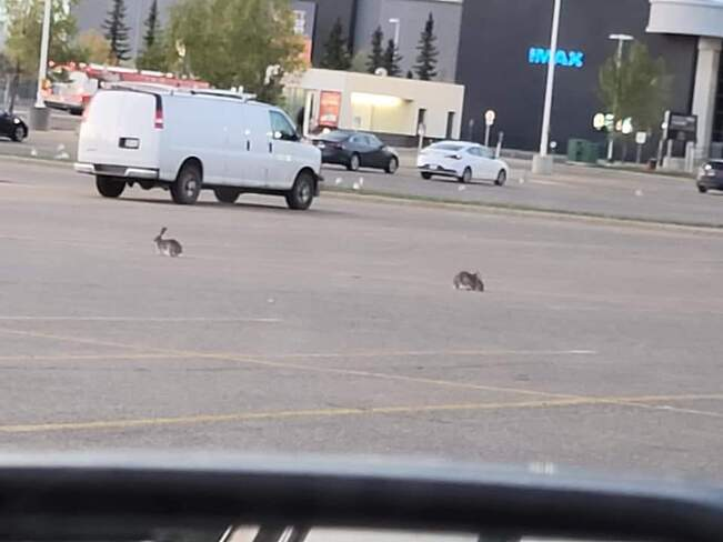 wabbit meeting Calgary, AB