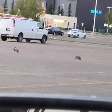 wabbit meeting
