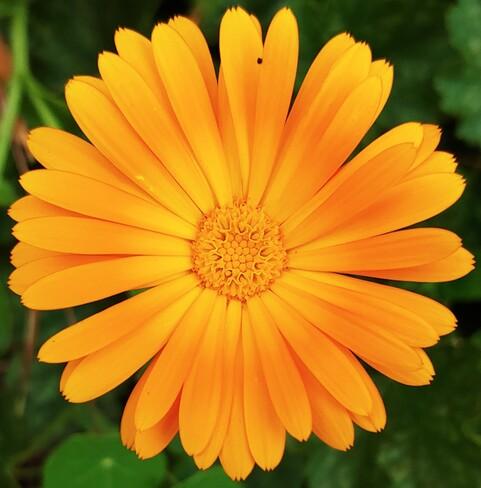 Flower Power Clinton, ON