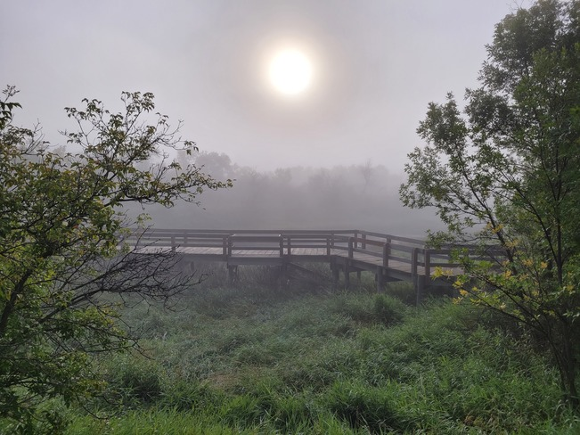 foggy morning Saskatchewan Moose Jaw, SK