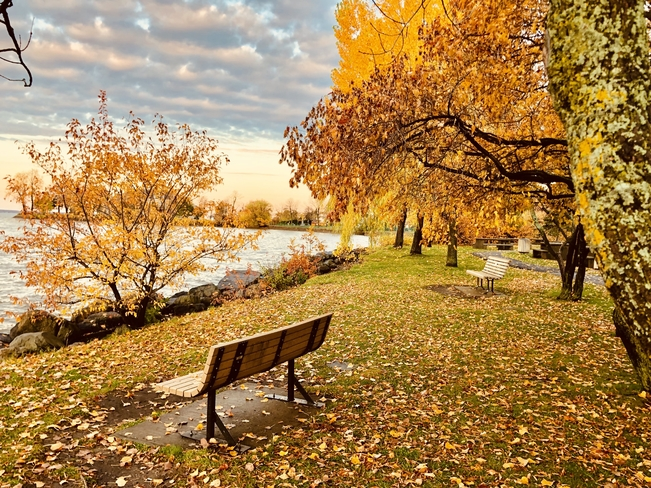 Autumn colours!! Dorval, Quebec, CA