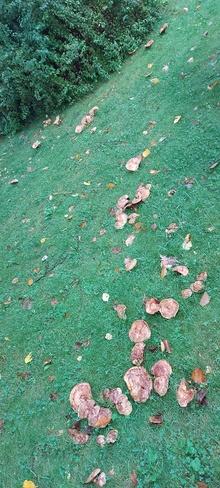 Scattered Across the Lawn Etobicoke, ON