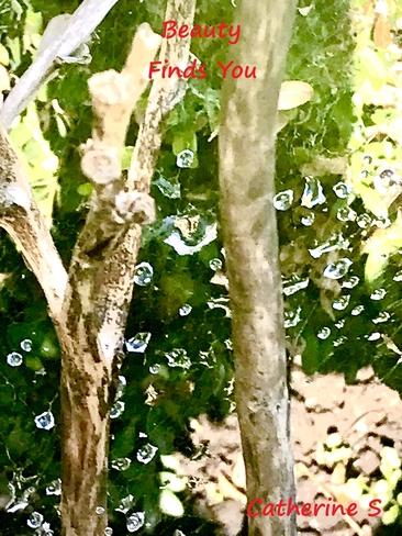 Cobweb Shimmering with Raindrops Toronto, Ontario, CA